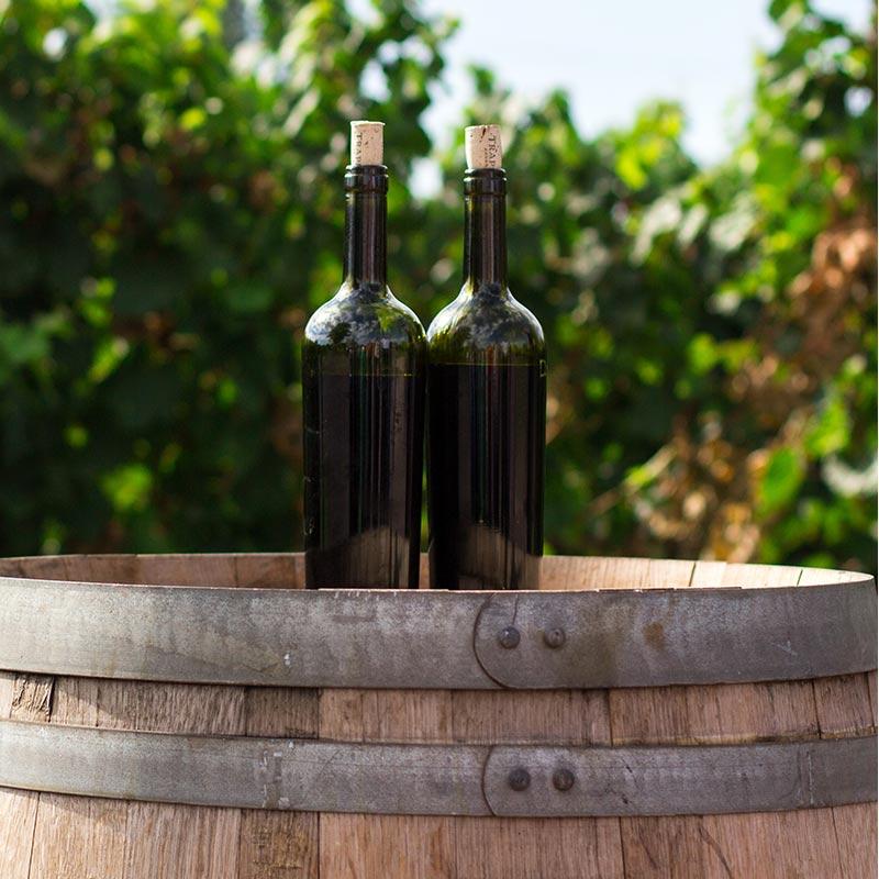 visit Syros vineyards, οργανωμένες επισκέψεις σε αμπελώνες Σύρου