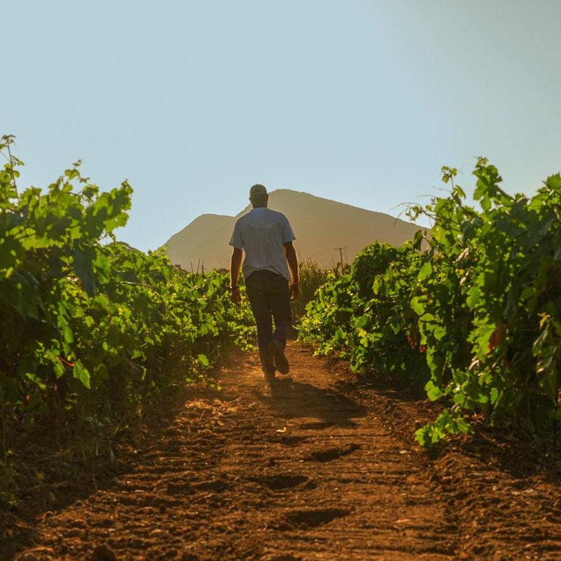 freris winery syros