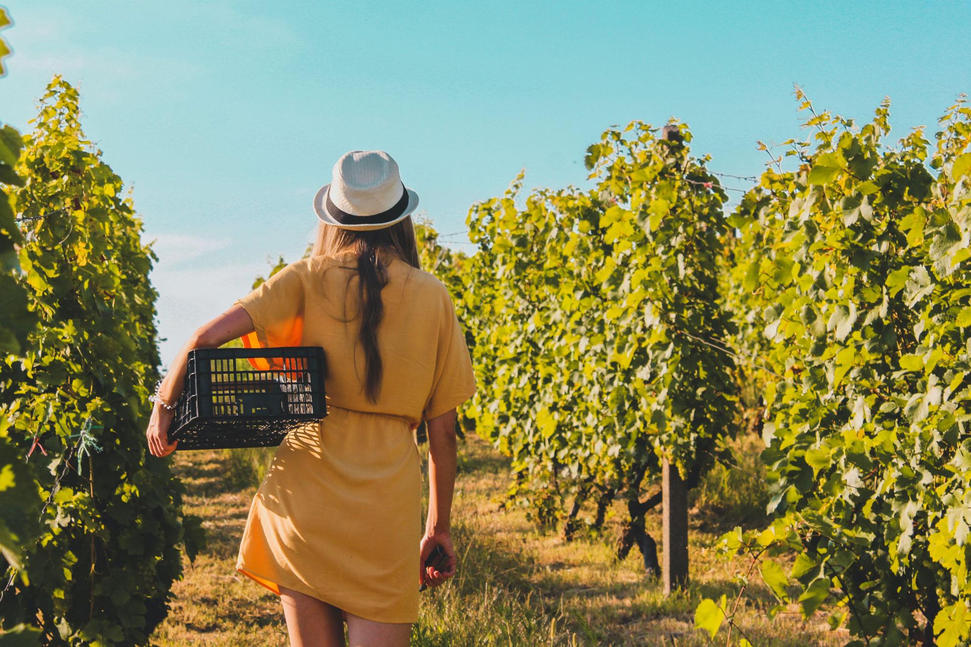 syros wine trails